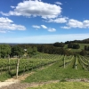 Vineyards at Bethany in the Barossa, reflect the 80 acre form of the original land purchases.