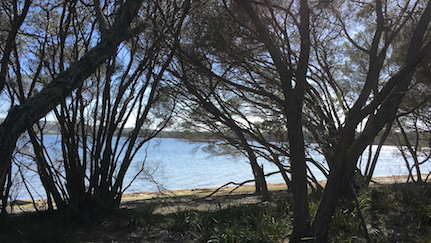View through tea-tree at Hobart Beach across Wallagoot Lake in Bournda National Park.